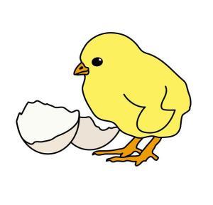 ayam-atau-telur